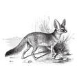 fennec fox vintage vector image