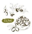 Olive Set of vector image
