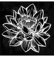 Sketch of lily lotus flower in linear style vector image vector image
