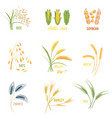 cereal plants icons vector image