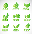 Green leaves design vector image vector image