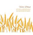 Wheat ear card vector image vector image