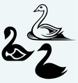 Swan sign vector image vector image