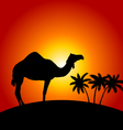 Silhouette of camel on the sunset background vector image