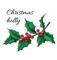 Hand drawn Holly Christmas mistletoe plant vector image