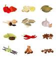 Paprika ginger bay poppy sesame garlic vector image