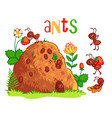 with an anthill and ants vector image