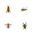 realistic locust bee wasp and other vector image