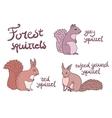 Forest squirrels set vector image