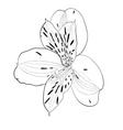 beautiful monochrome black and white Alstroemeria vector image