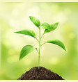 small green sprout vector image