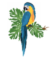 Parrot sitting on a tree branch vector image