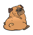 pug dog isolated on a white background vector image