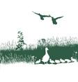 Wild duck spring vector image