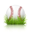 Baseball on grass vector image