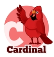 ABC Cartoon Cardinal vector image