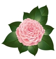 realistic camellia flower vector image vector image