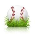 Baseball on grass vector image