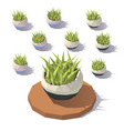 low poly potted grass vector image