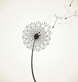 Flower a dandelion4 vector image vector image