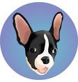 beautiful dog bulldog vector image