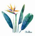 watercolor strelitzia collection vector image
