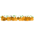 Pumpkins with sprouts and leaves vector image