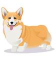 welsh corgi dog vector image