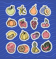 fruit set in bright color on blue background vector image