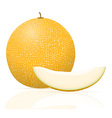 melon 03 vector image