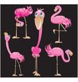 Flamingos cartoons vector image
