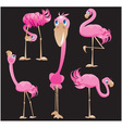 Flamingos cartoons vector image