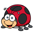 Lady bug vector image vector image