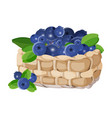 wicker basket with blueberries realistic vector image