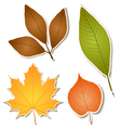 Autumn leaf sticker set vector image