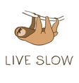 cute hanging sloth vector image