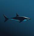Great White Shark color vector image