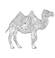 Coloring camel animal for adults vector image
