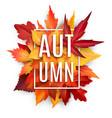 autumn leaf poster with fall season foliage vector image