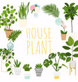 house plants flowerpot isolated objects vector image