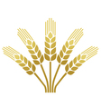 wheat ear icon vector image