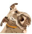 schnauzer dog vector image