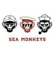 sea monkey vector image