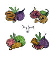 set of different fig fruit fresh and dried fruits vector image