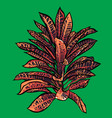 tropical leaves jungle collection hand painted vector image