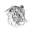 face of calm tiger vector image