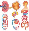 Human Body Parts Set vector image vector image
