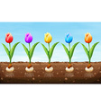 Different color tulip on the ground vector image
