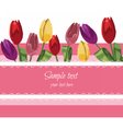 Greeting Card with blooming Tulip vector image