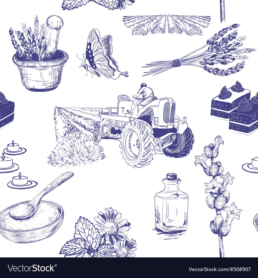 Hand drawn seamless pattern with lavenders vector